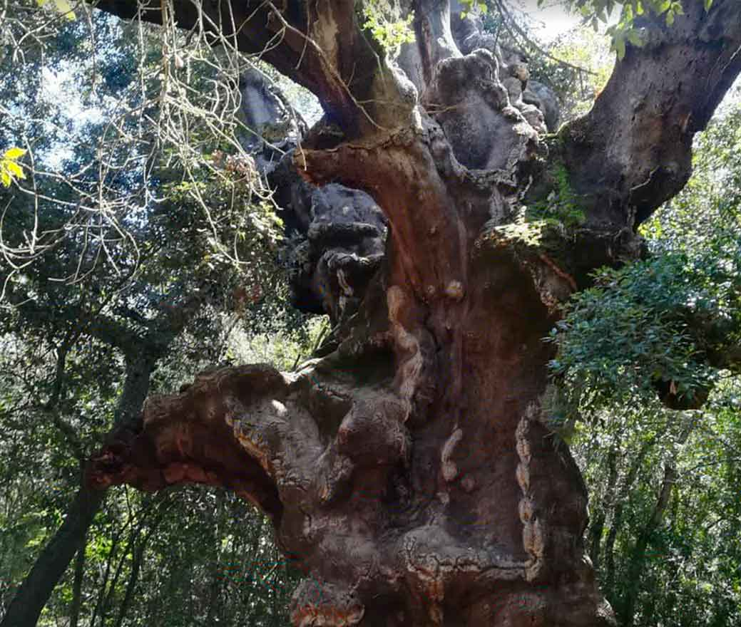 la grande quercia riserva naturale sughereta Niscemi