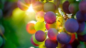vino nero d'avola
