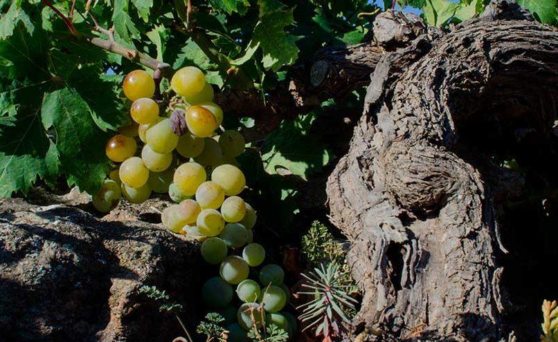 cosa assaggiare a pantelleria