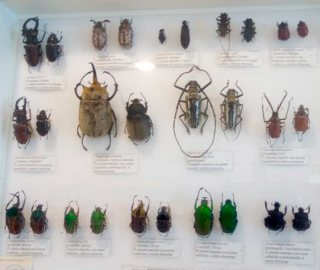 Museo Insecta floresta