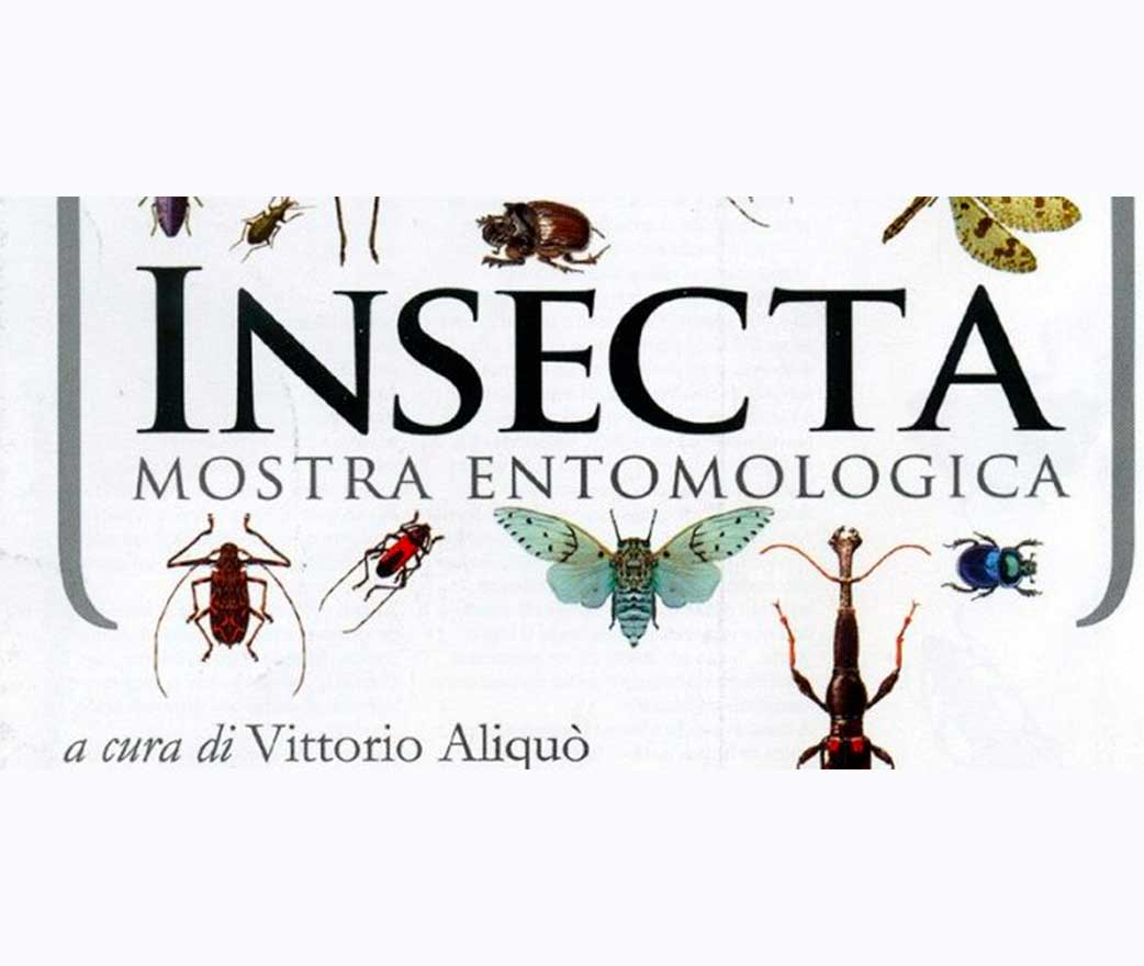 Mostra Museo Insecta floresta