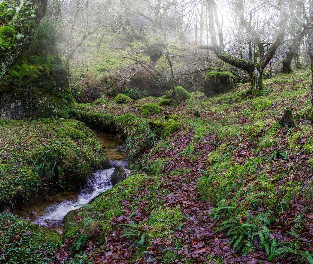 riserva naturale parco dei nebrodi floresta