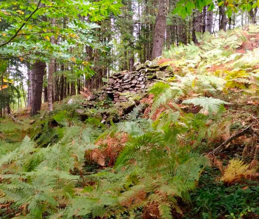 Riserva Naturale Bosco di Malabotta Nebrodi