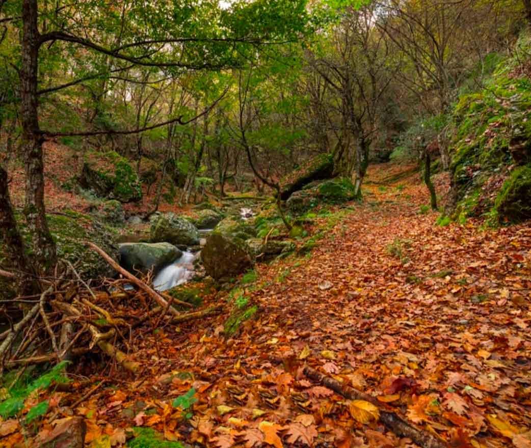 Riserva Naturale Malabotta a Montalbano Elicona